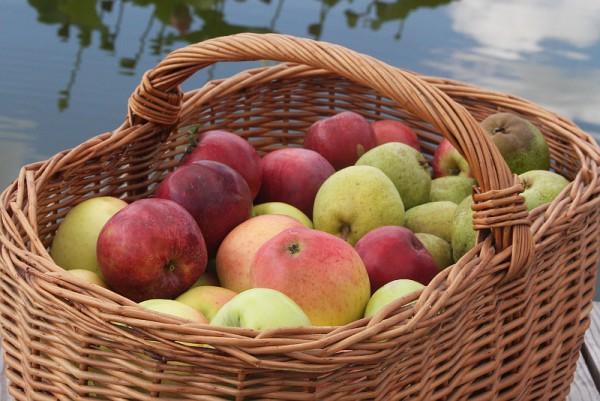 5 Kilo Äpfel gemischt, von unserer Streuobstwiese