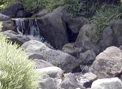Rund Um Den Teich Nymphaion Seerosen Lotos Teichpflanzen Und Stauden